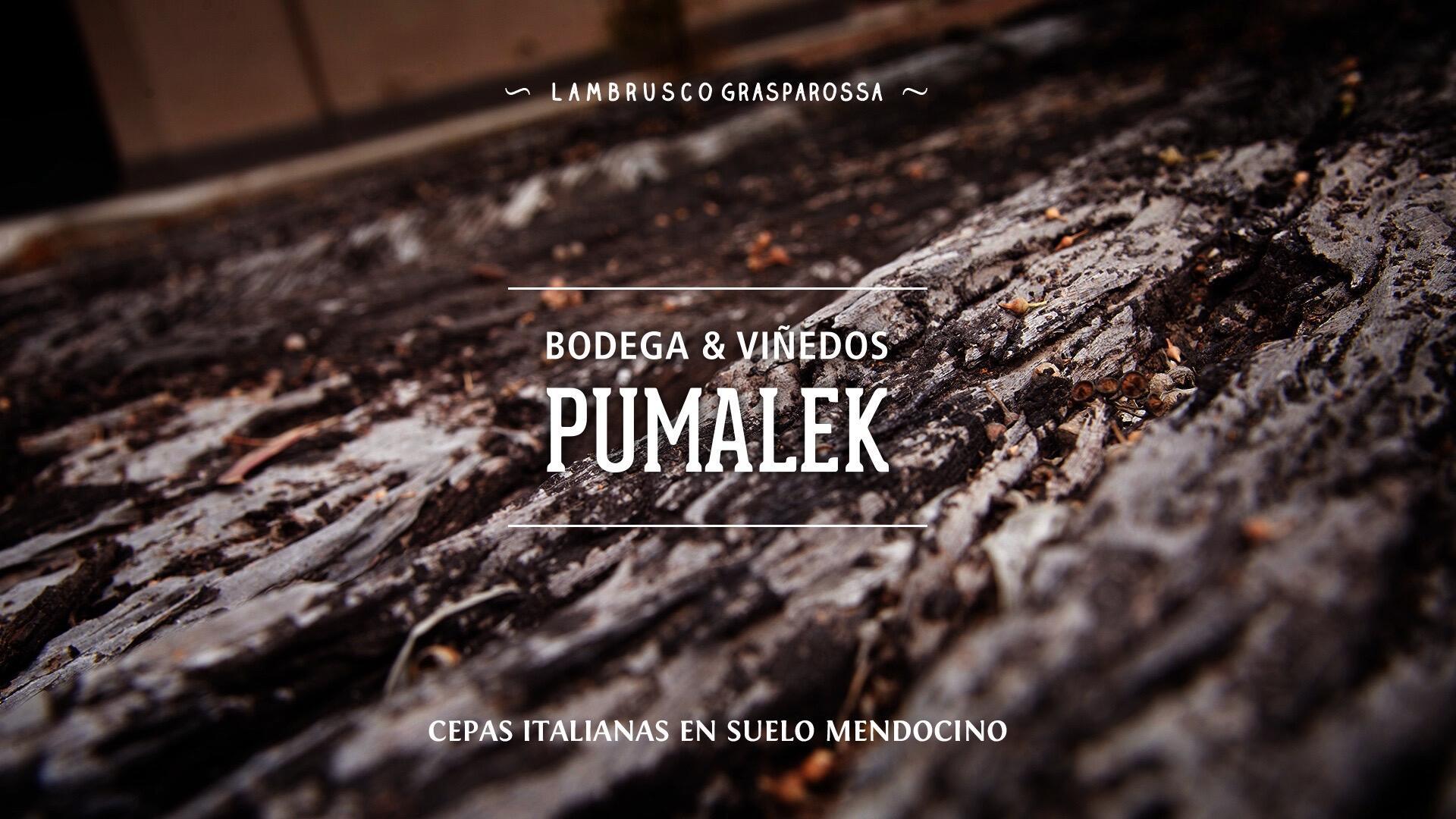 Pumalek Cover Image