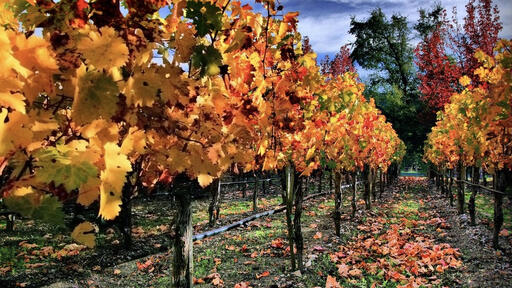 Vincent Arroyo Winery Image