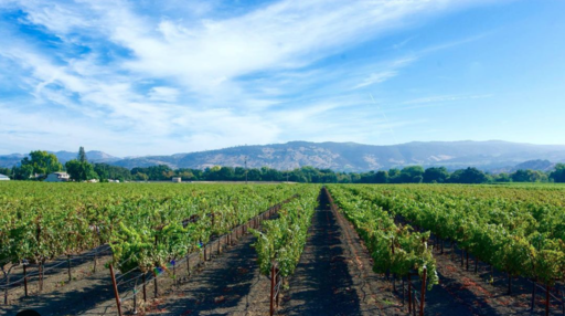 The Vice Napa Valley Wines Image