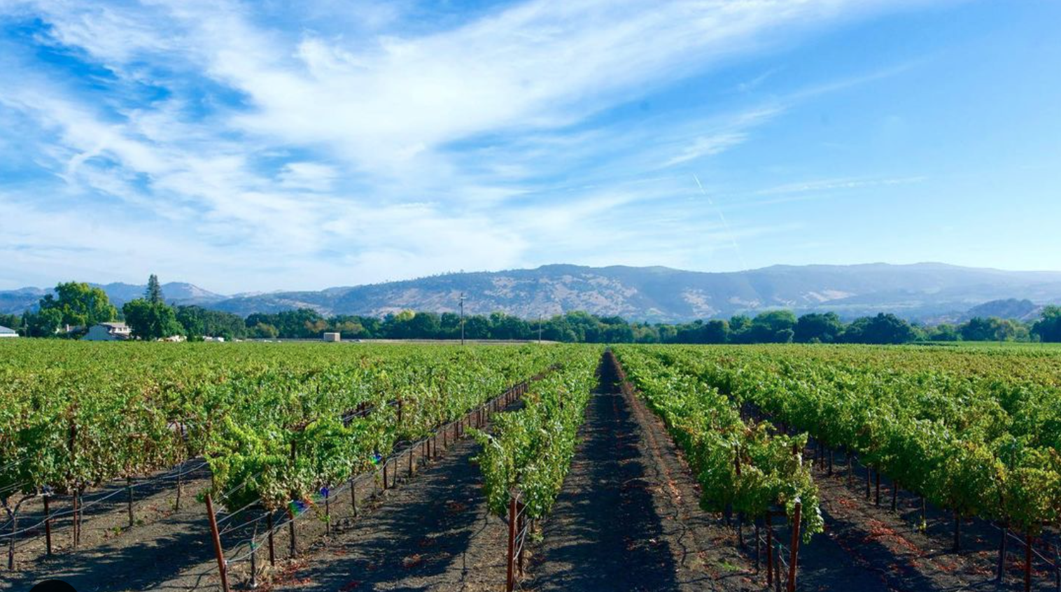 The Vice Napa Valley Wines Cover Image