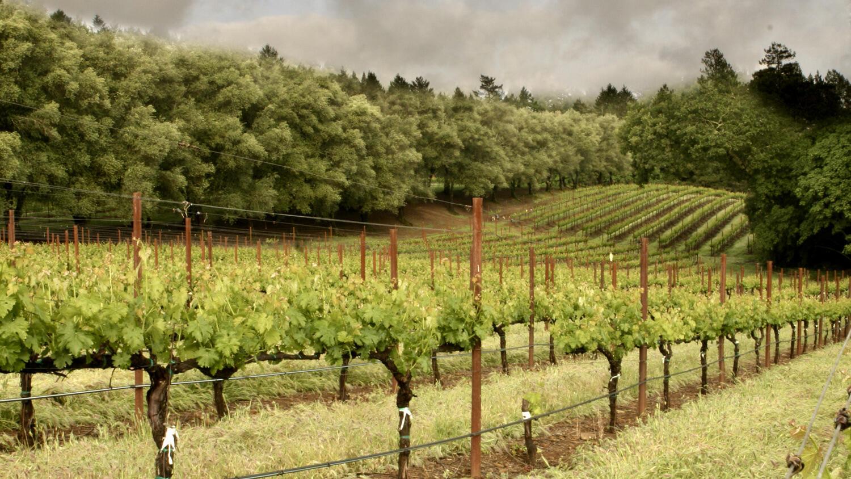 Davies Vineyards Cover Image