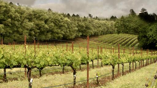 Davies Vineyards Image