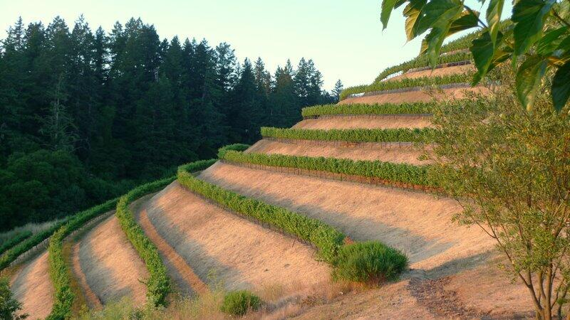 Fisher Vineyards Cover Image