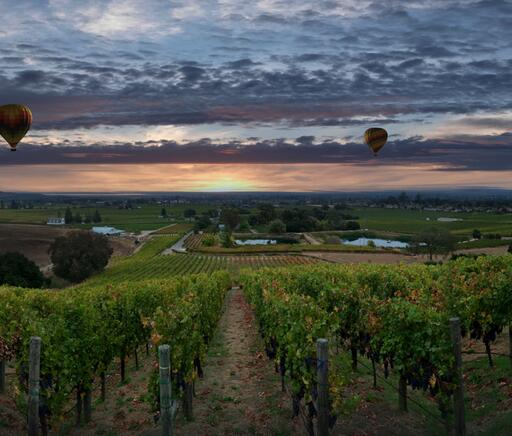 Padis Vineyards Image