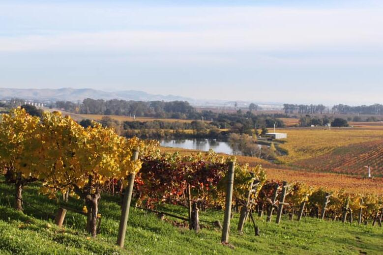Kale Wines Cover Image