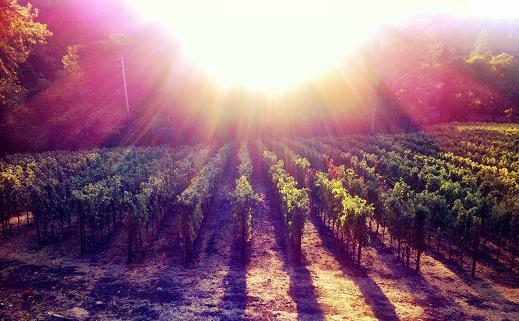 Haber Family Vineyards Cover Image