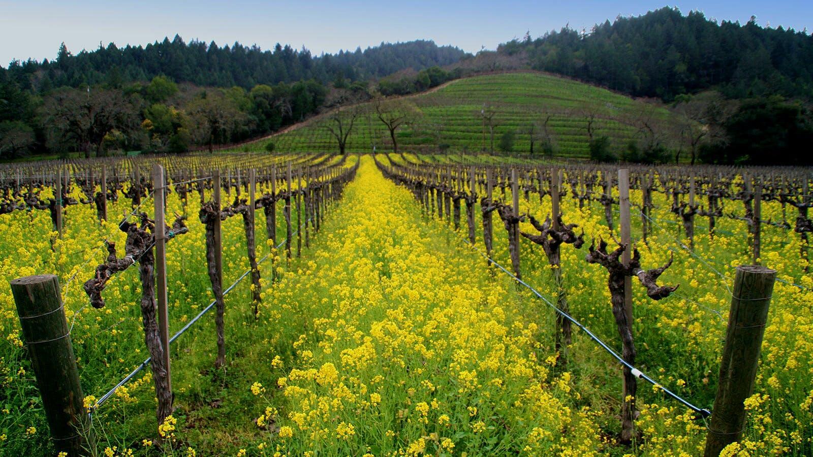 Detert Family Vineyards Cover Image
