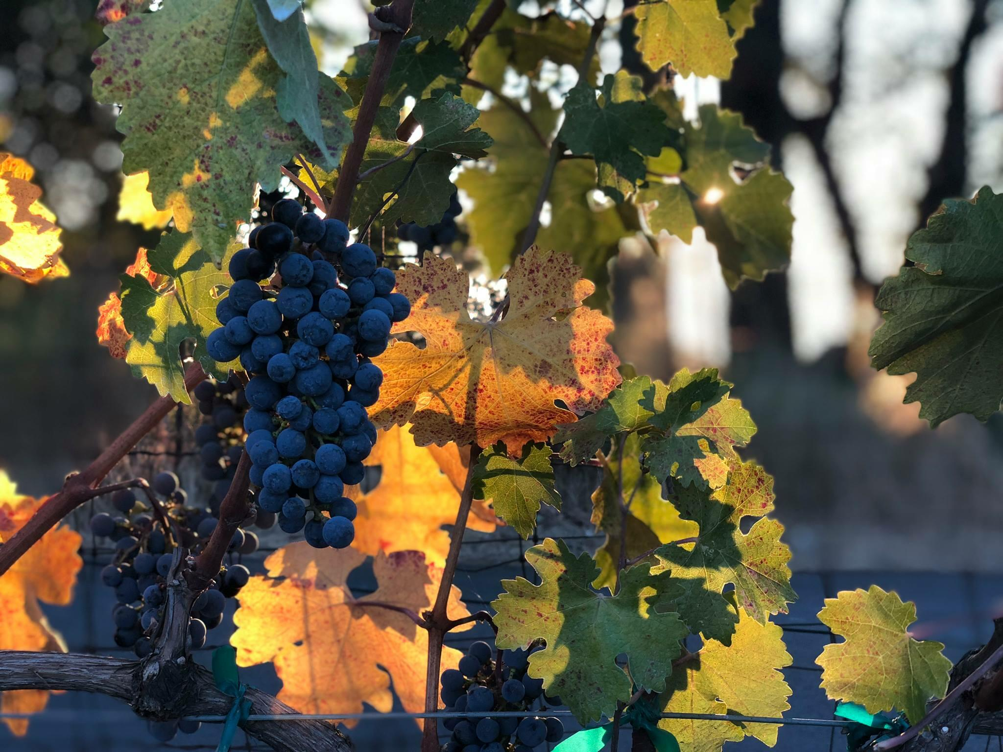 Summit Lake Vineyards & Winery Cover Image