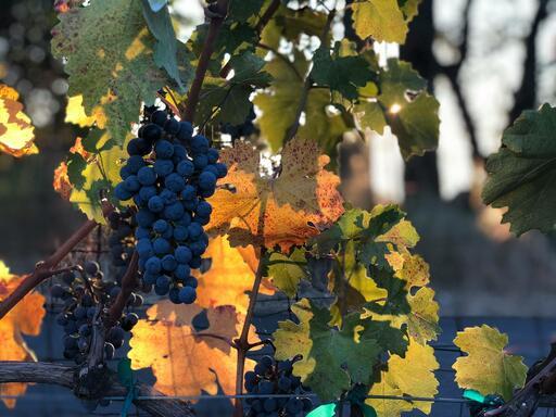 Summit Lake Vineyards & Winery Image
