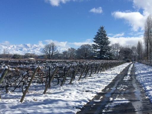 Gouguenheim Winery Image