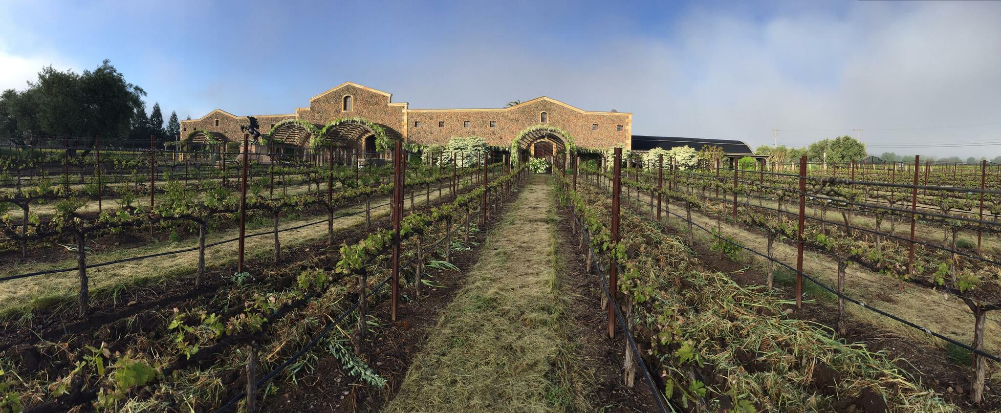 Black Stallion Estate Winery Cover Image
