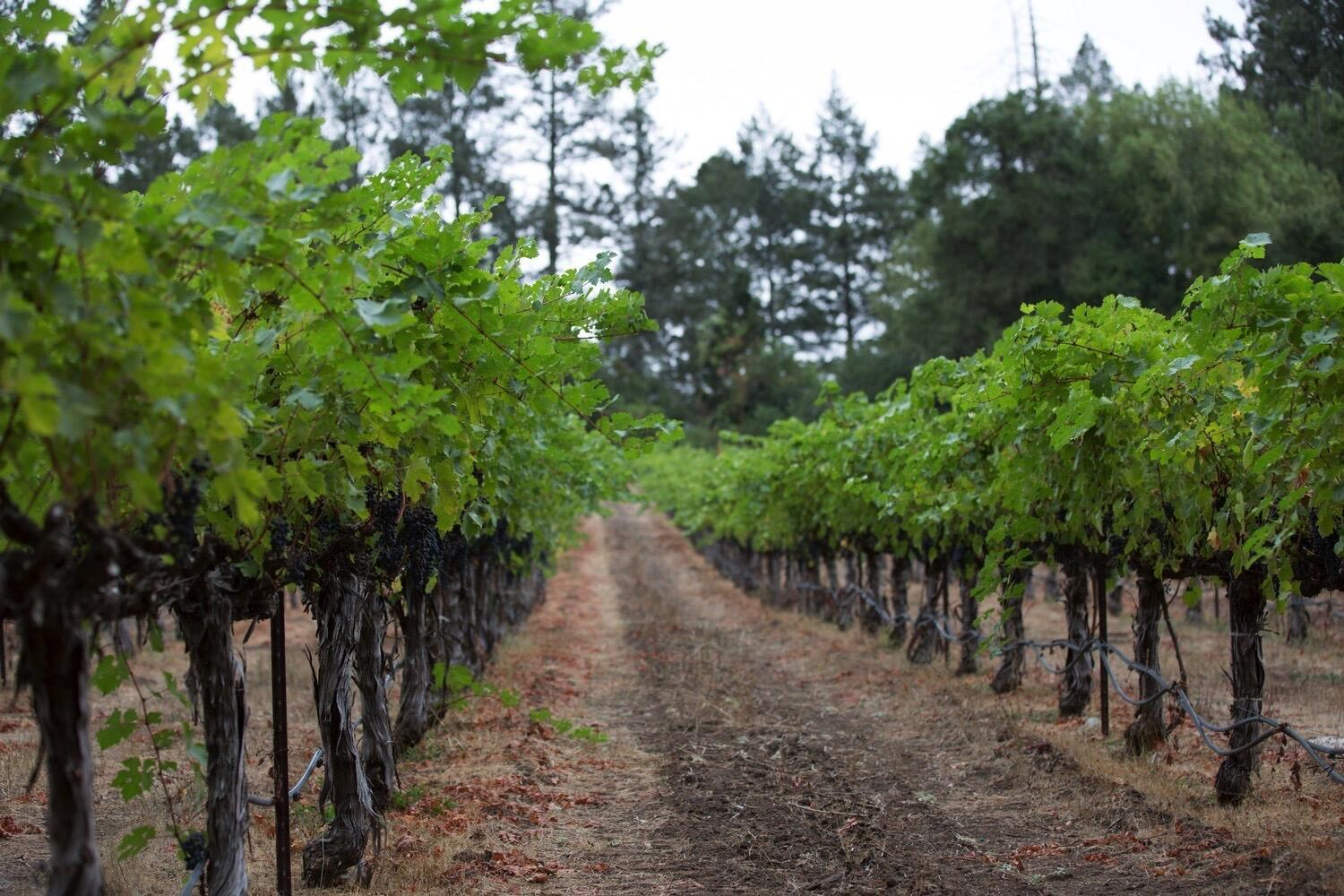 Snowden Vineyards Cover Image