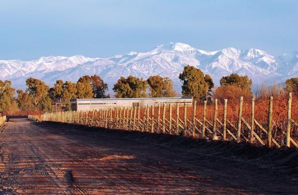 Huarpe Wines Cover Image