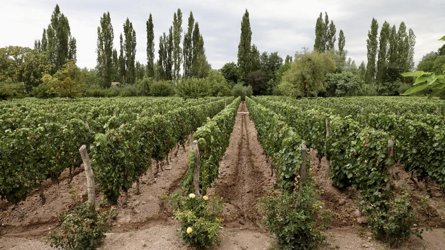 Adalgisa Wines Cover Image
