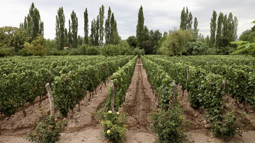 Adalgisa Wines Image