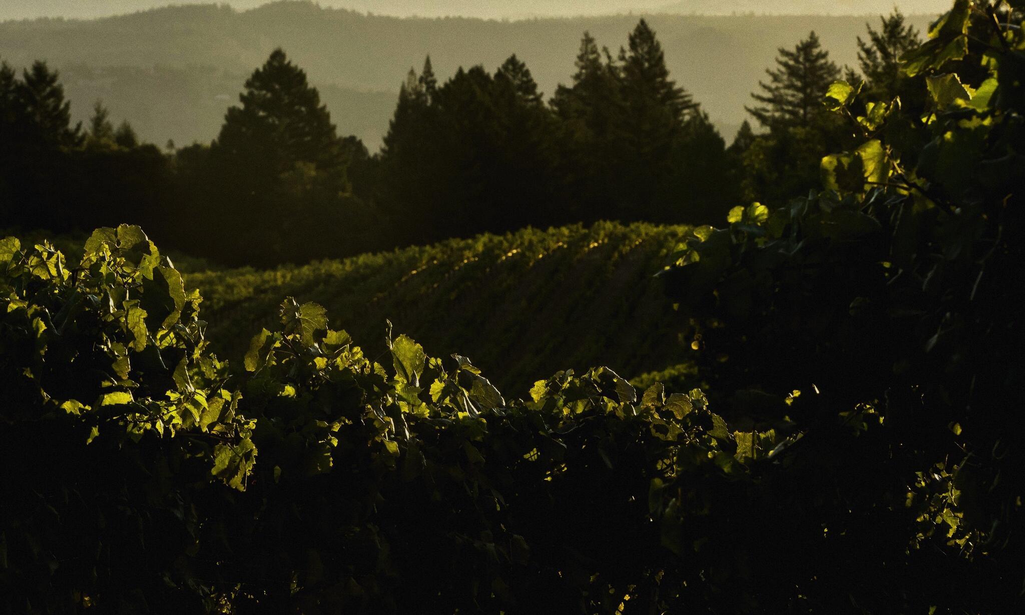 Bjorn Vineyards Cover Image