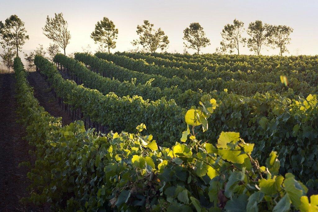 Gold Coast Vineyards Cover Image