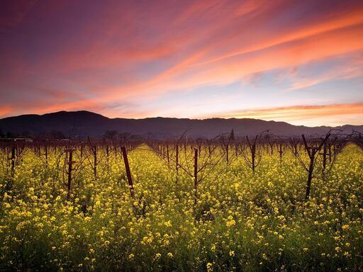 Courtesan Wines Image
