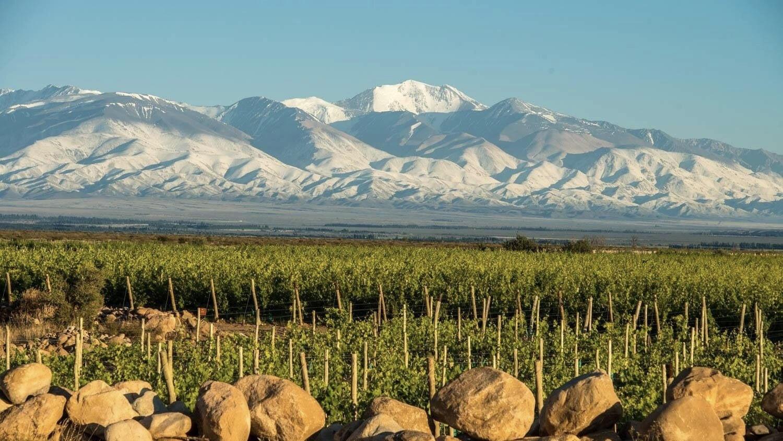 Leo Borsi Wines Cover Image
