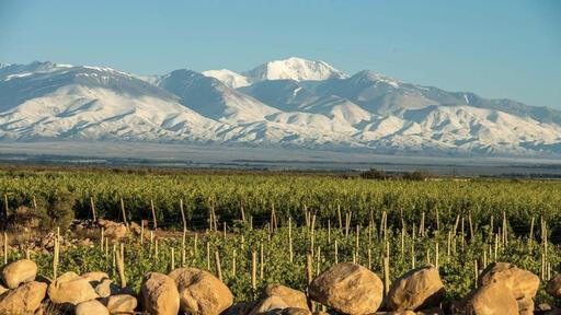 Leo Borsi Wines Image