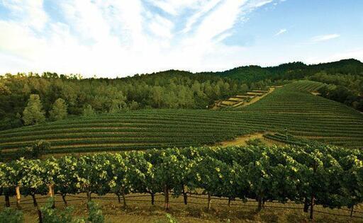 Clark-Claudon Vineyards Image