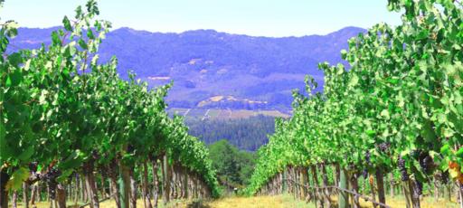 Hertelendy Vineyards Image