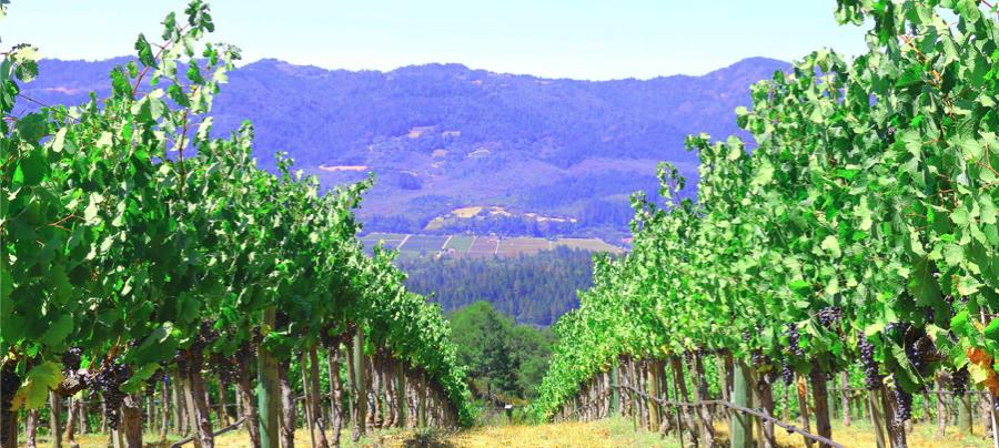 Hertelendy Vineyards Cover Image
