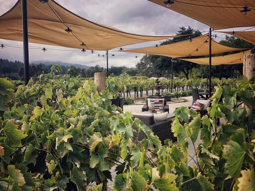 Benessere  Vineyards Image