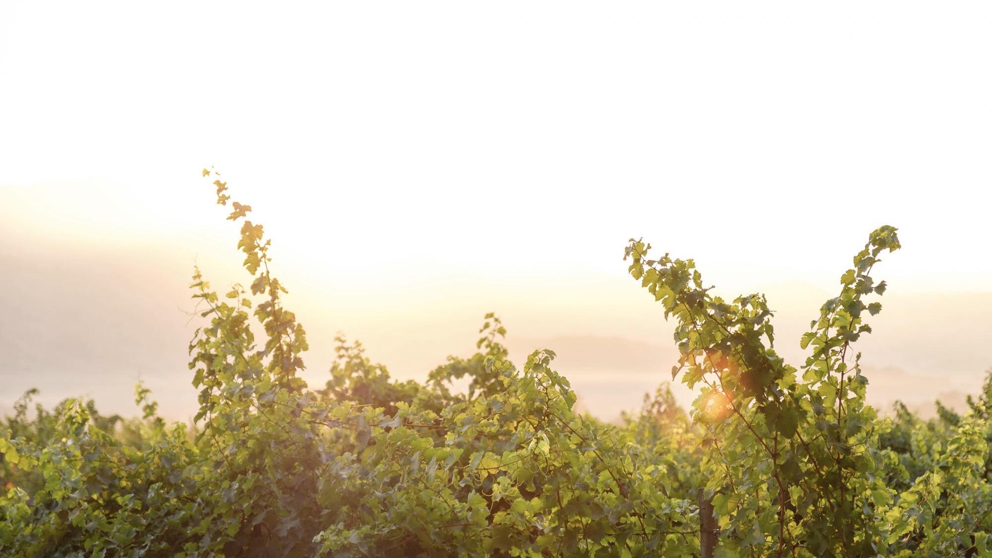 Mathew Bruno Wines Cover Image