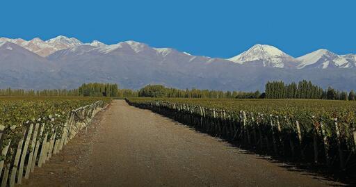 Clop Wines Image