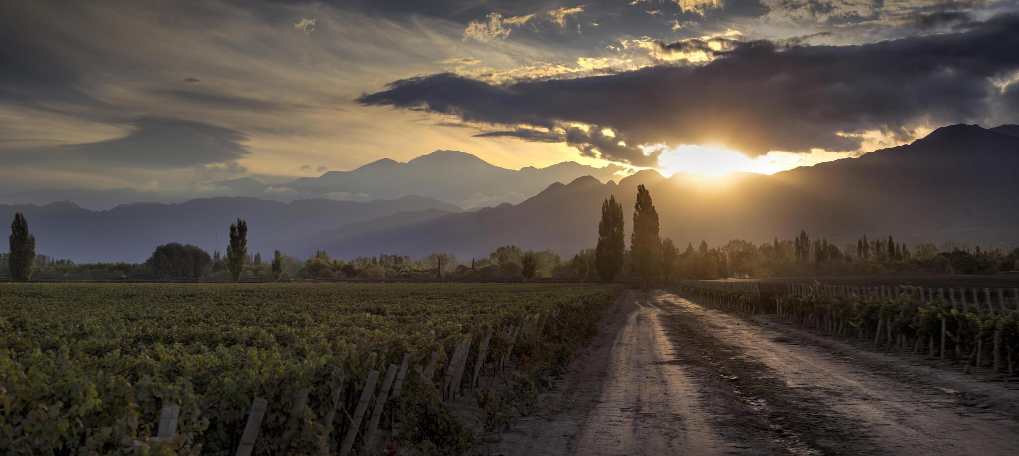 Alta Vista Wines Cover Image