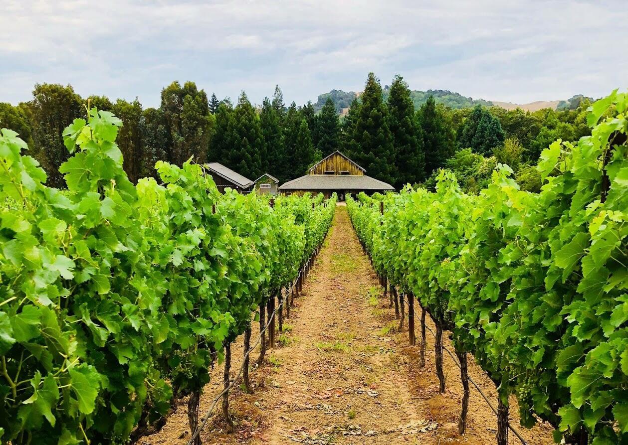 Reid Family Vineyards Cover Image