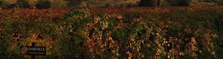 Teaderman Vineyards Cover Image
