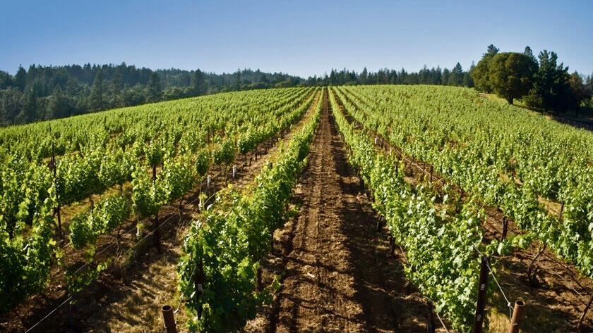 Provenance Vineyards Cover Image
