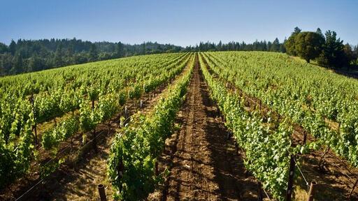 Provenance Vineyards Image