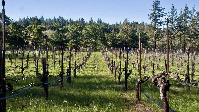 Dyer Vineyard Cover Image