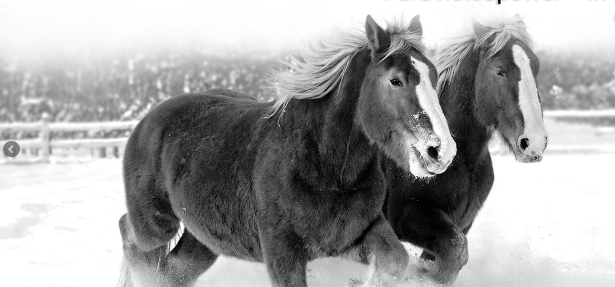 Horsepower Vineyards Cover Image
