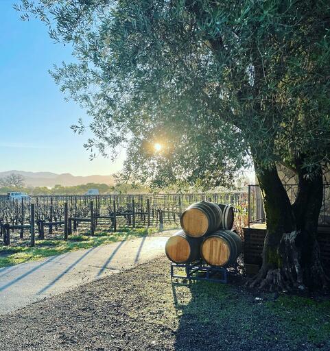 Grand Napa Vineyards Image