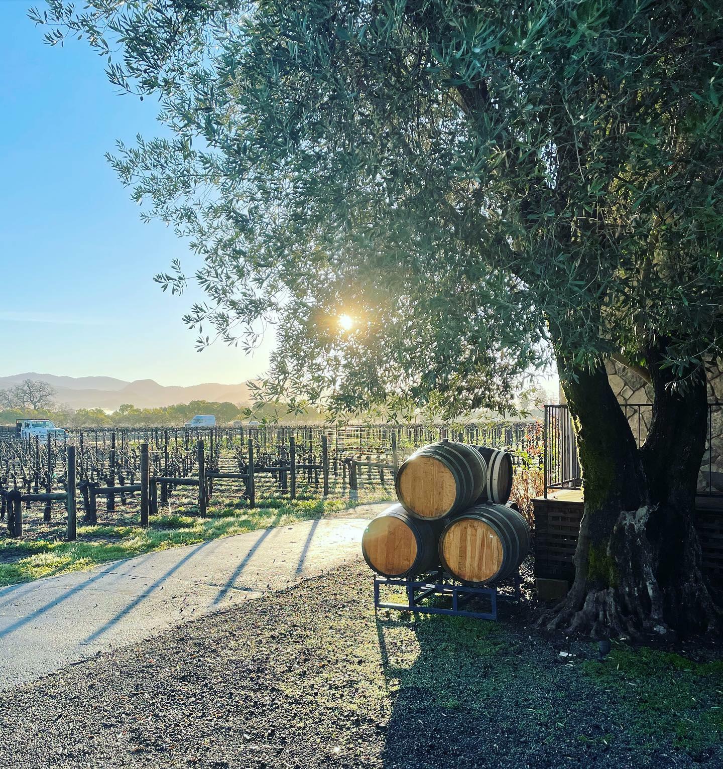 Grand Napa Vineyards Cover Image