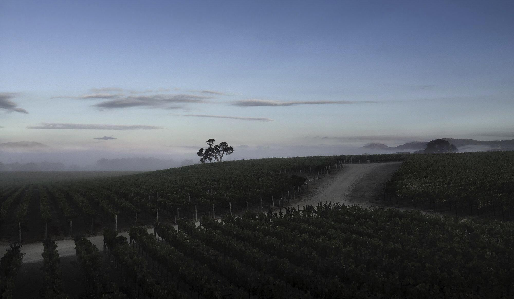 Meteor Vineyard Cover Image