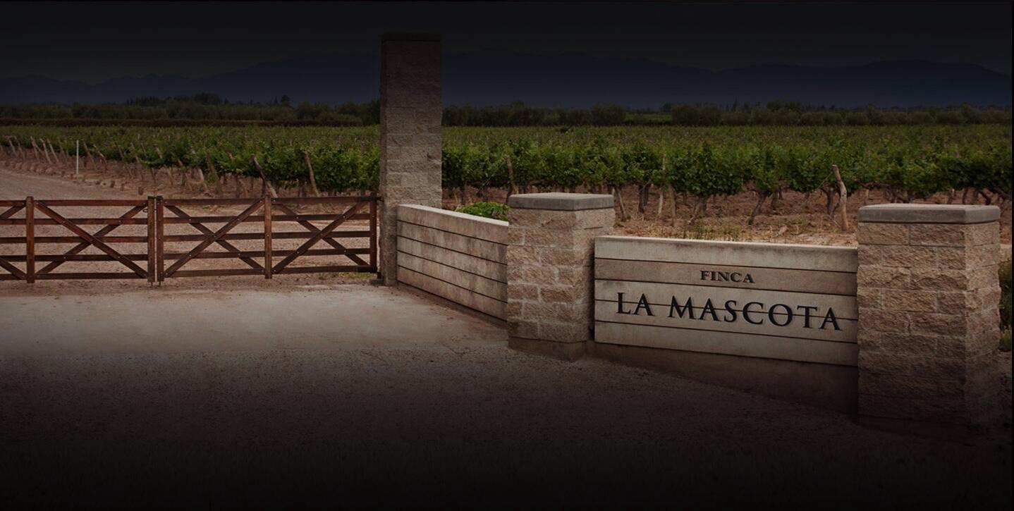 Mascota Vineyards Cover Image