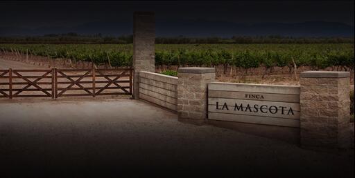Mascota Vineyards Image