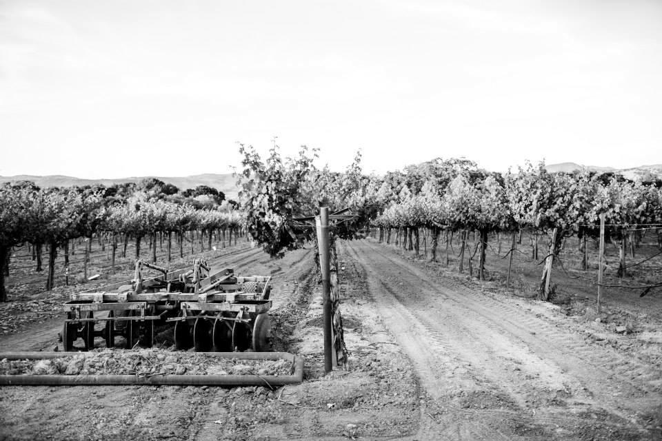 Hoopes Vineyard Cover Image