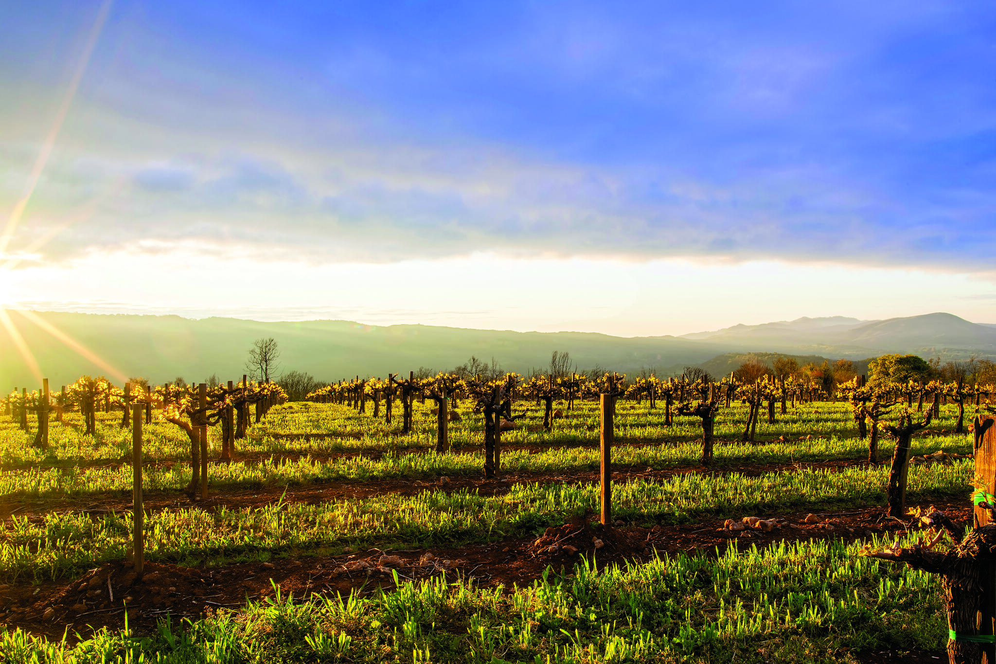 Caymus Vineyards Cover Image
