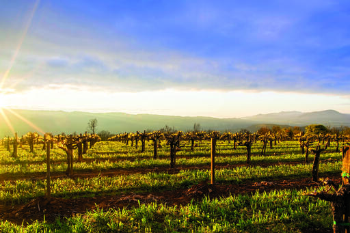 Caymus Vineyards Image