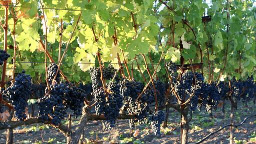 DoublePlus Wines Image