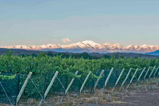 Gauchezco Vineyard & Winery Image
