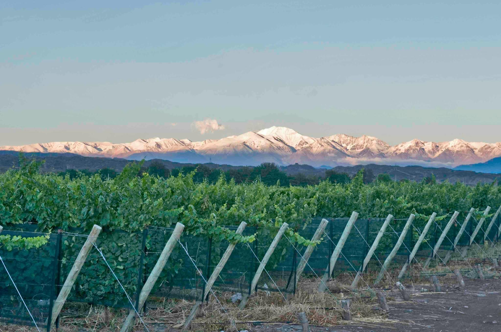 Gauchezco Vineyard & Winery Cover Image