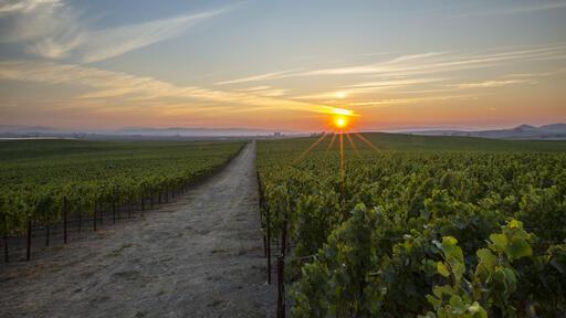 Rombauer Vineyards Image