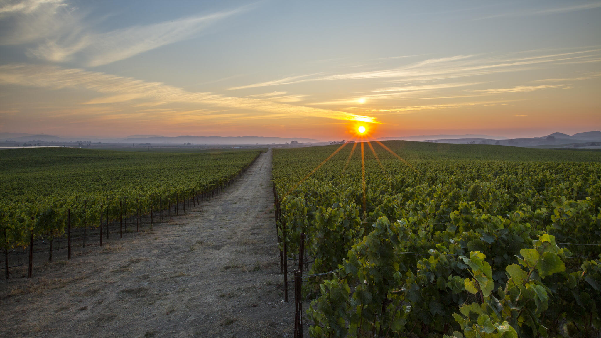 Rombauer Vineyards Cover Image
